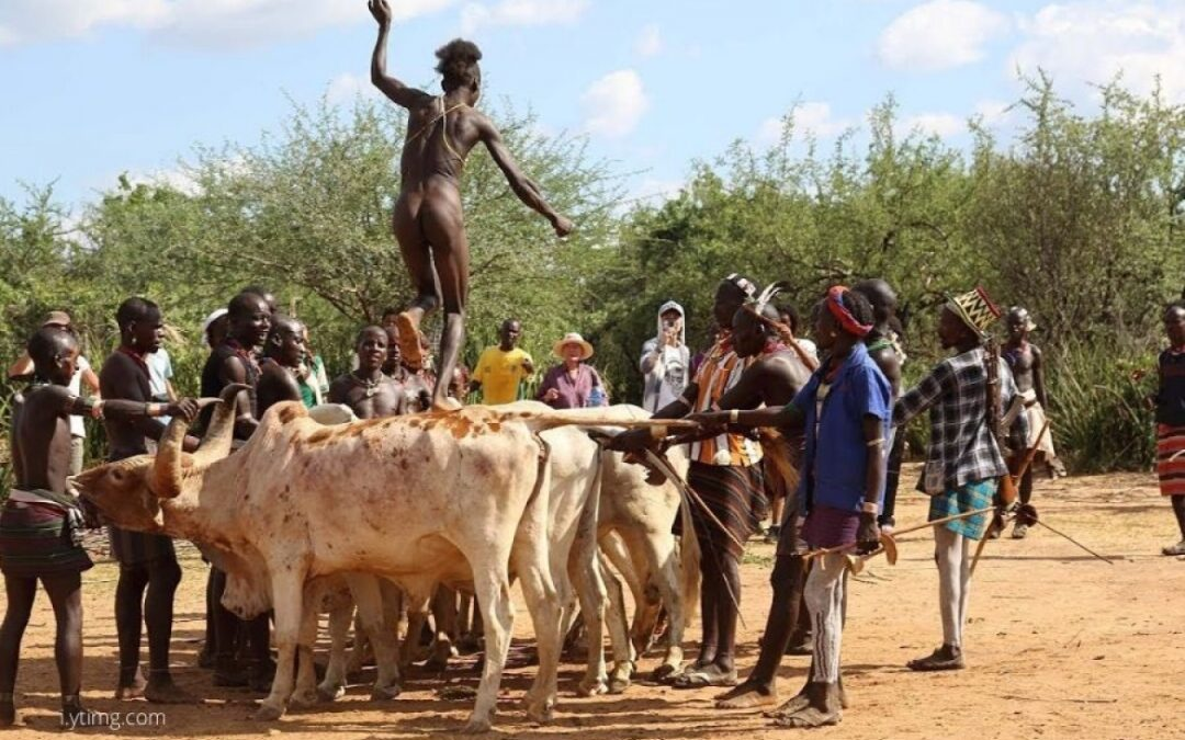 Everything You Need to Know About the Hamer Tribe Bull ...