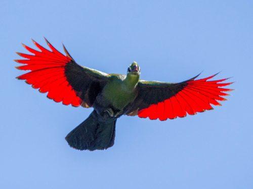 11 Days Ethiopia Birds Tours