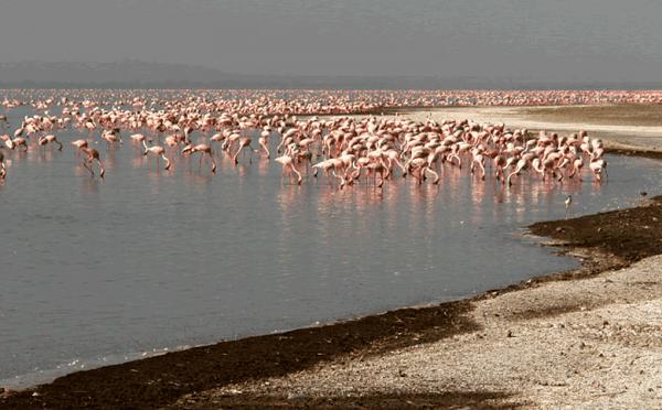 2 Days Abijata Shalla National Park Tours