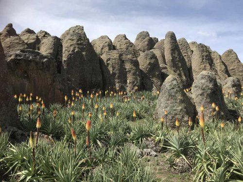 4 Days Bale Mountain National Park Trekking