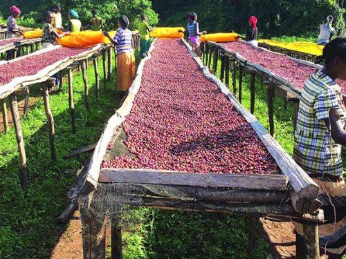 4 Days Ethiopia Coffee Tours