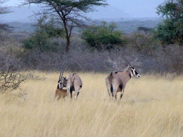 5 Days Awash National Park, Harar, Dire Dewa & Babile Tour